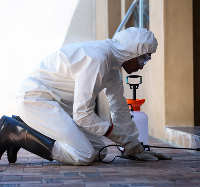 Best Pest Control Services in Hyderabad